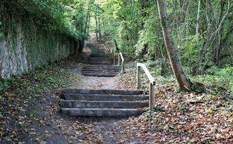 Foto: Stufen im Wald